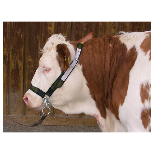 Хомут для коров с цепью kerbl