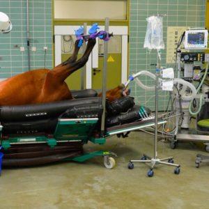 Лечебно-диагностическое оборудование