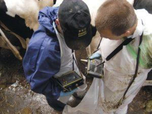 УЗИ диагностика – необходимый инструмент в современном животноводстве  продажа по ценам от завода