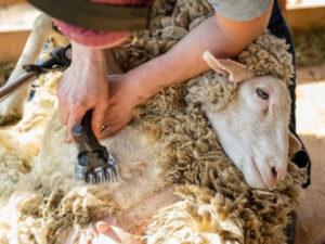 Как подобрать машинку для стрижки животных?