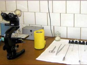 Пункт искусственного осеменения: устройство, требования, необходимое оборудование